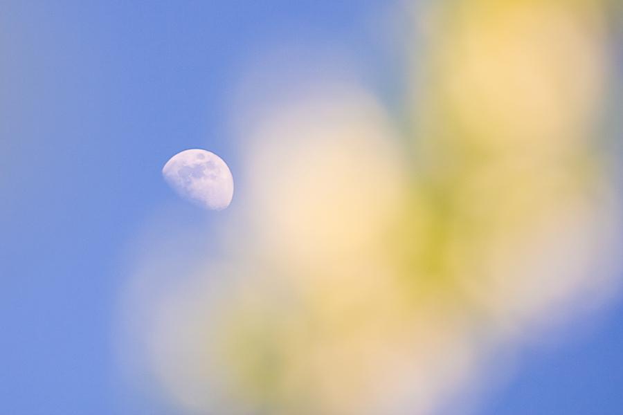 Gemütlich Mond Färbung Seite Fotos - Framing Malvorlagen ...